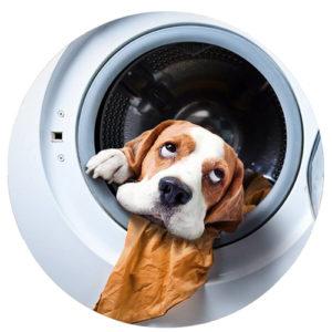 lavare cuccia cane gatti