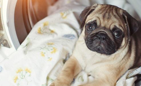Come lavare coperte e cuccie degli animali domestici